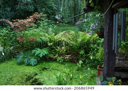garden pond with a variety of diffrent plants - stock photo