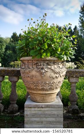 garden pot - stock photo