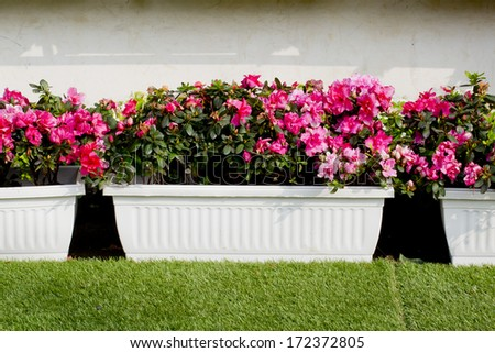garden pot with colorful flowers - stock photo