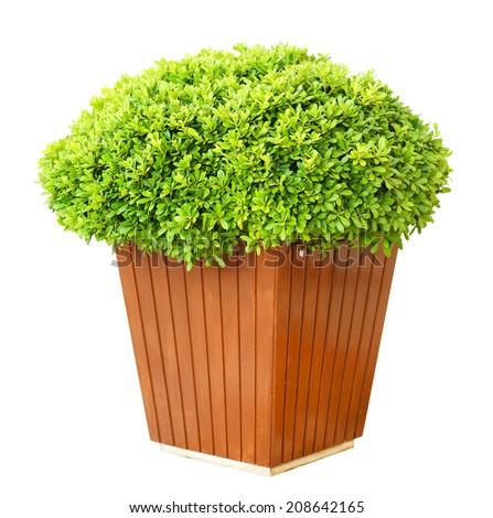 Garden pot with lush bushes isolated on white - stock photo