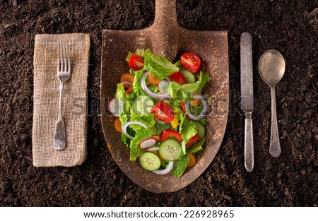 Garden salad organic farm to table healthy eating concept on soil background. - stock photo