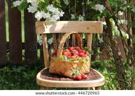 Garden scene. Ripe and sweet strawberry in wicker basket on vintage wooden very old chair. Sunny and summer day in garden. Outdoor and space, natural light and shadows - stock photo
