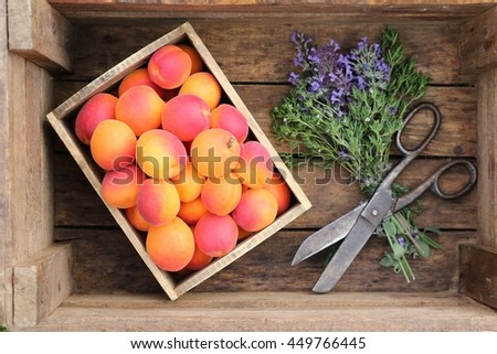 Garden scene with fresh colorful apricots in small wooden box, rustic big scissors, bouquet of purple flowers in dark very old box. Still life, outdoor and space , real light in garden - stock photo
