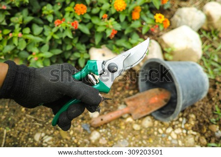 garden scissors in man's hand