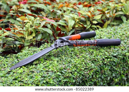 Garden shears on tree - stock photo