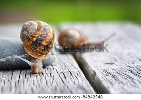 Garden snail ? Snails provide an easily harvested source of protein to many people around the world. - stock photo