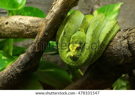 Garden Snake Stock Photo (Safe to Use) 478101547 - Shutterstock