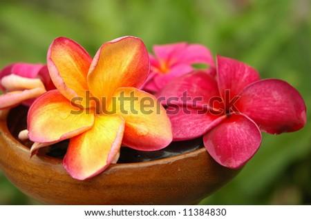 Garden Spa - stock photo