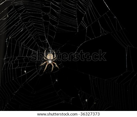 Garden spider on its web at night. Focus on spider. - stock photo