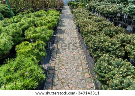 Garden Store Center Many Yang Coniferous Stock Photo (Royalty Free ...