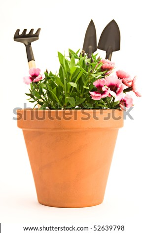 Garden tools and carnation in clay flower pot isolated on white background - stock photo