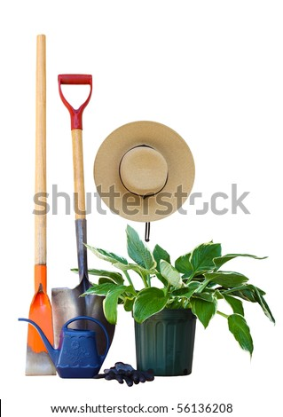 Garden tools and hosta plant isolated on white - stock photo
