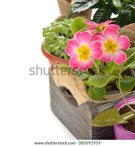 Garden tools on a white background - stock photo