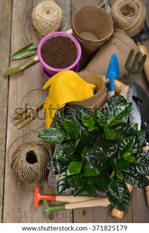 Garden tools on a wooden background