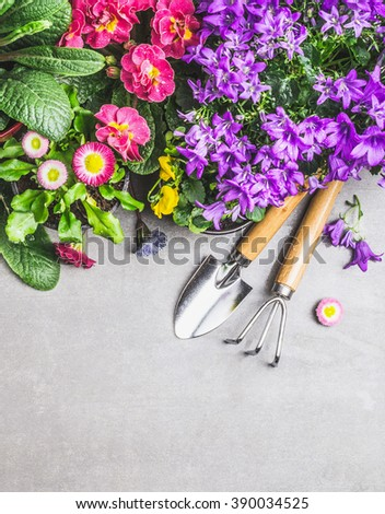 Garden tools with decorative summer flowers on gray stone concrete background, top view, border - stock photo