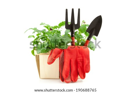 Garden tools with plants isolated on white background - stock photo