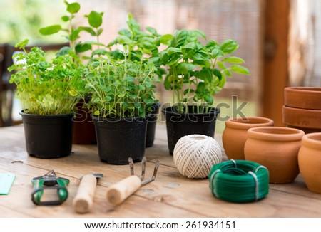 Garden Tools with Seedlings Vegetable - stock photo