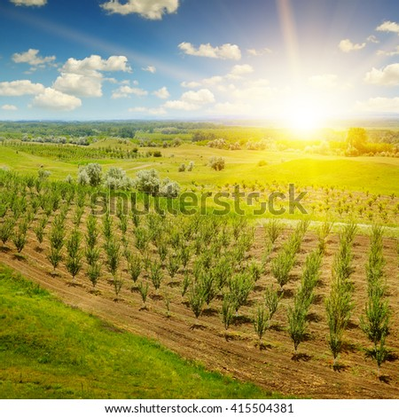 garden with fruit trees and sunrise - stock photo