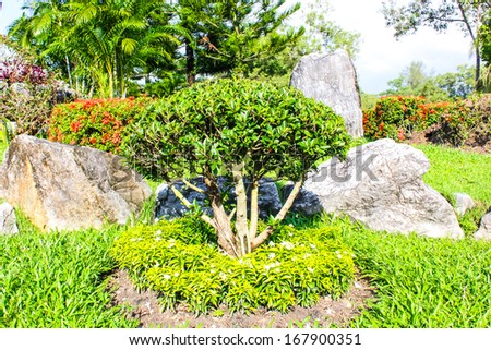 garden with little tree and green grass landscaping - stock photo