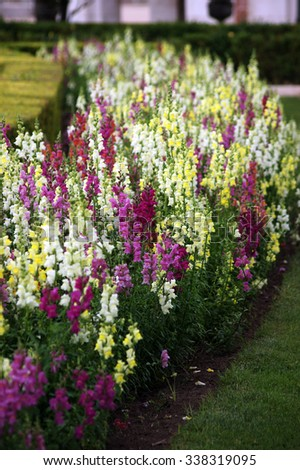 Garden with plants of the same type of white, pink, red and yellow