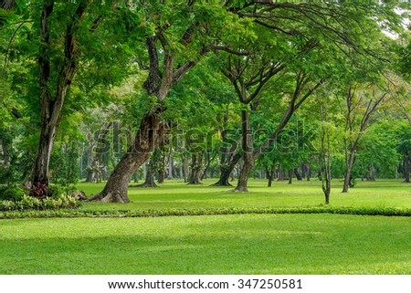 Garden with shady trees. - stock photo
