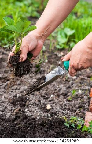 Garden work - stock photo