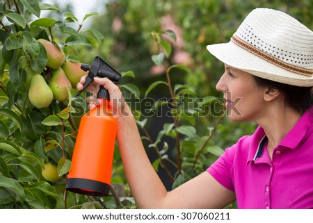 Gardener applying an insecticide/a fertilizer to his fruit shrubs, using a sprayer - stock photo