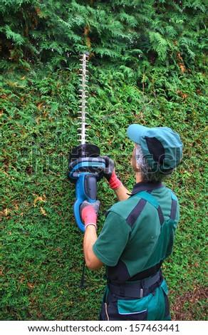 gardener cutting thuja hedge in the garden - stock photo