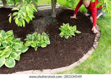 Gardener doing mulch work around the house kneeling down on a lush green lawn to spread the organic mulch by hand at the edge of the formal flowerbed - stock photo