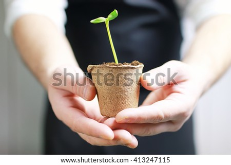 gardener hand sprout in palms - stock photo
