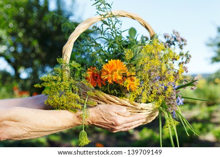 Gardener Hands holding a woolen basket with spring flowers - stock photo