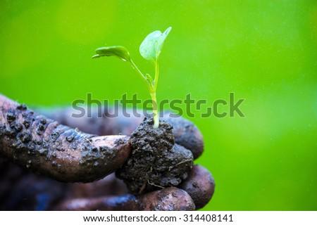 Gardener hands preparing soil for seedling in ground - stock photo