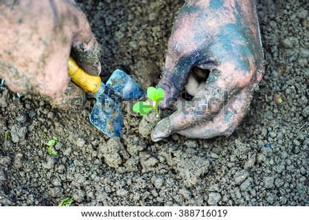 Gardener hands preparing soil for seedling in ground - stock photo