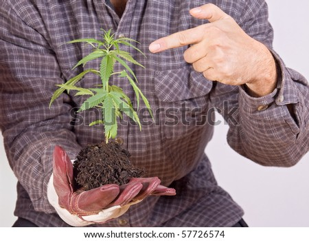 Gardener holding a plant in her hand. Man showing seedling marijuana.