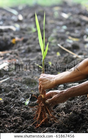 Gardener planting a new plant - stock photo
