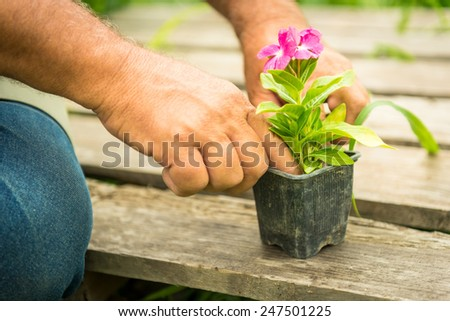 Gardener planting flowers - stock photo