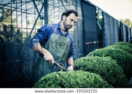 Gardener pruning at nursery - stock photo