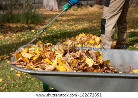 Gardener raking autumn leaves in the garden - stock photo