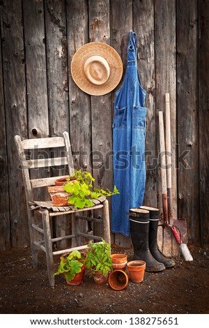 Gardener's tools by an old shed with potted squashes and a tomato ready for transplanting - stock photo
