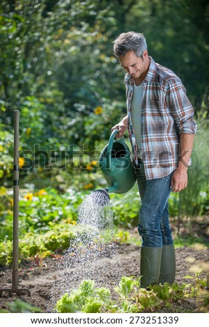 gardener standing in his garden watering salads with a watering can - stock photo
