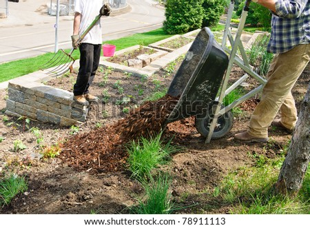 Gardener tipping wheelbarrow full of mulch - stock photo