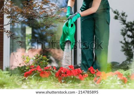 Gardener watering red flowers in beautiful garden - stock photo
