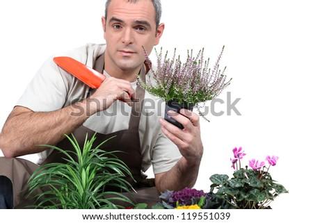 Gardener with plants - stock photo