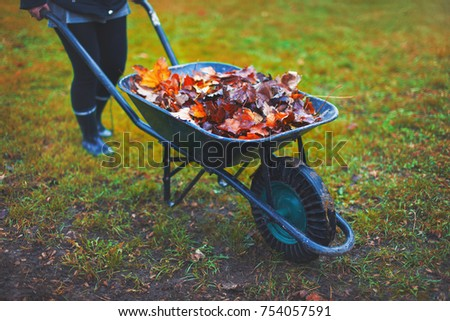 Gardener woman pushing wheelbarrow with leaves, autumn work outdoors