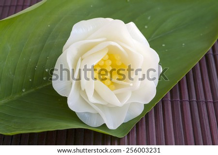 Gardenia candle flower on green leaf background - stock photo