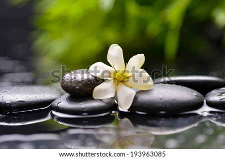 gardenia flower on pebbles with green on plant �wet background  - stock photo
