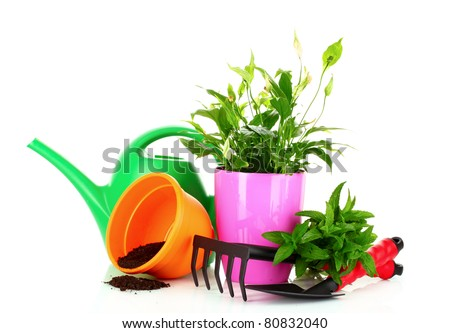 gardening and plant isolated on a white background - stock photo