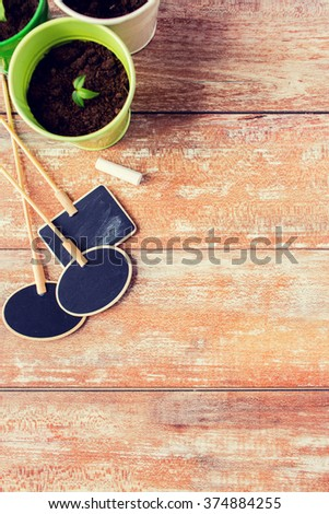 gardening and planting concept - close up of seedling and nameplates on table at home - stock photo