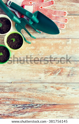 gardening and planting concept - close up of seedlings, garden tools and gloves on table - stock photo