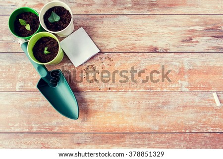 gardening and planting concept - close up of seedlings, garden trowel and seeds on table - stock photo